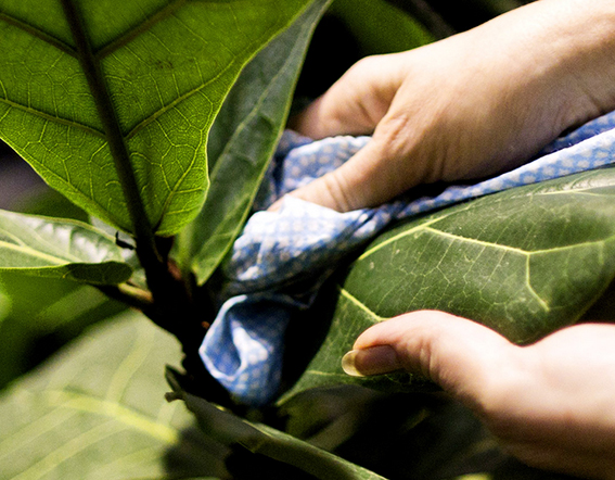 Caretaking for houseplants and biodecoration