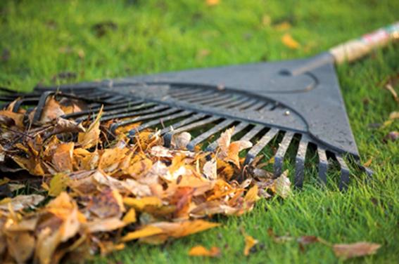 Lawn caretaking and maintenance