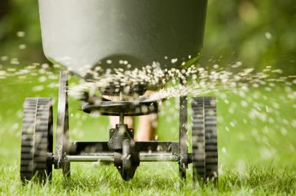 Grass Seeding