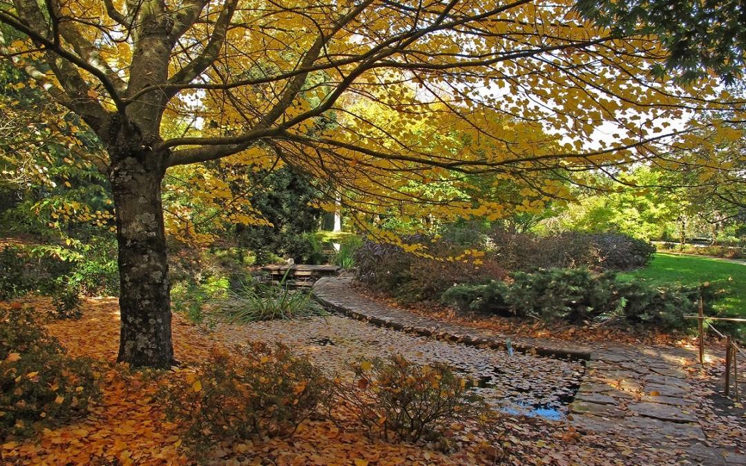 Jesenja sadnja